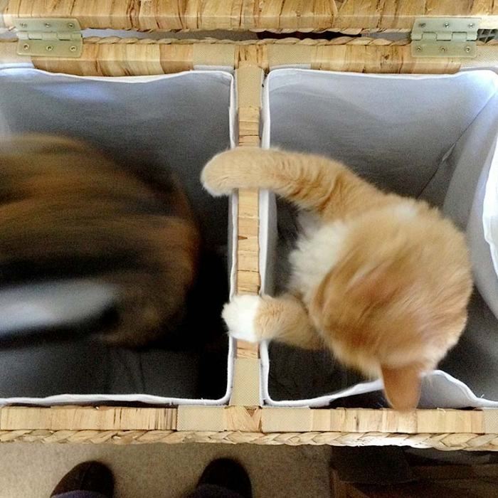 George and Millie playing in my laundry basket.